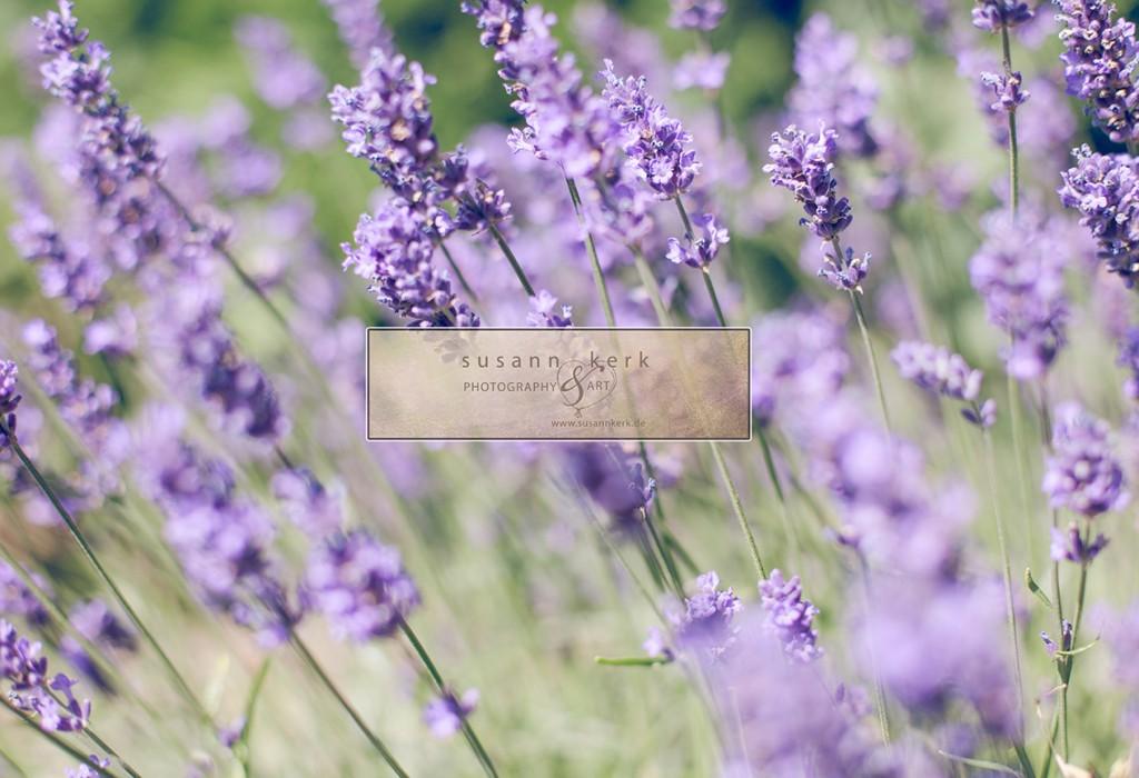 Fotografin Oranienburg Oranienwerk Landschaft Natur Lavendel